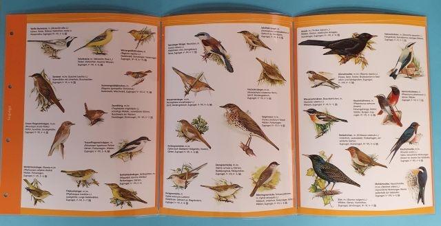 M-Chart, Einheimische Singvögel