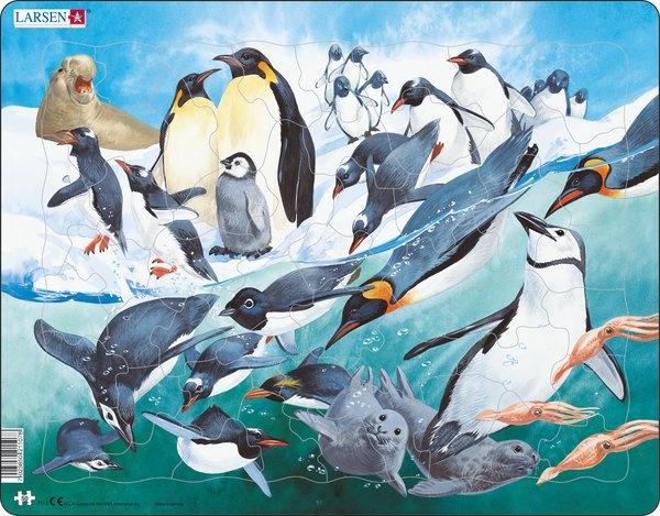 Puzzle - Pinguine, Format 36,5x28,5 cm, Teile 50