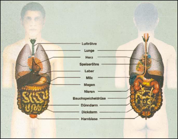 transparentmappe der mensch innere organe gesundheit krankheit 171980hag. Black Bedroom Furniture Sets. Home Design Ideas