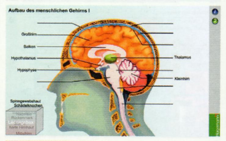 Interaktive Tafelbilder Nerven - Gehirn - Drogen, Verleihlizenz ...