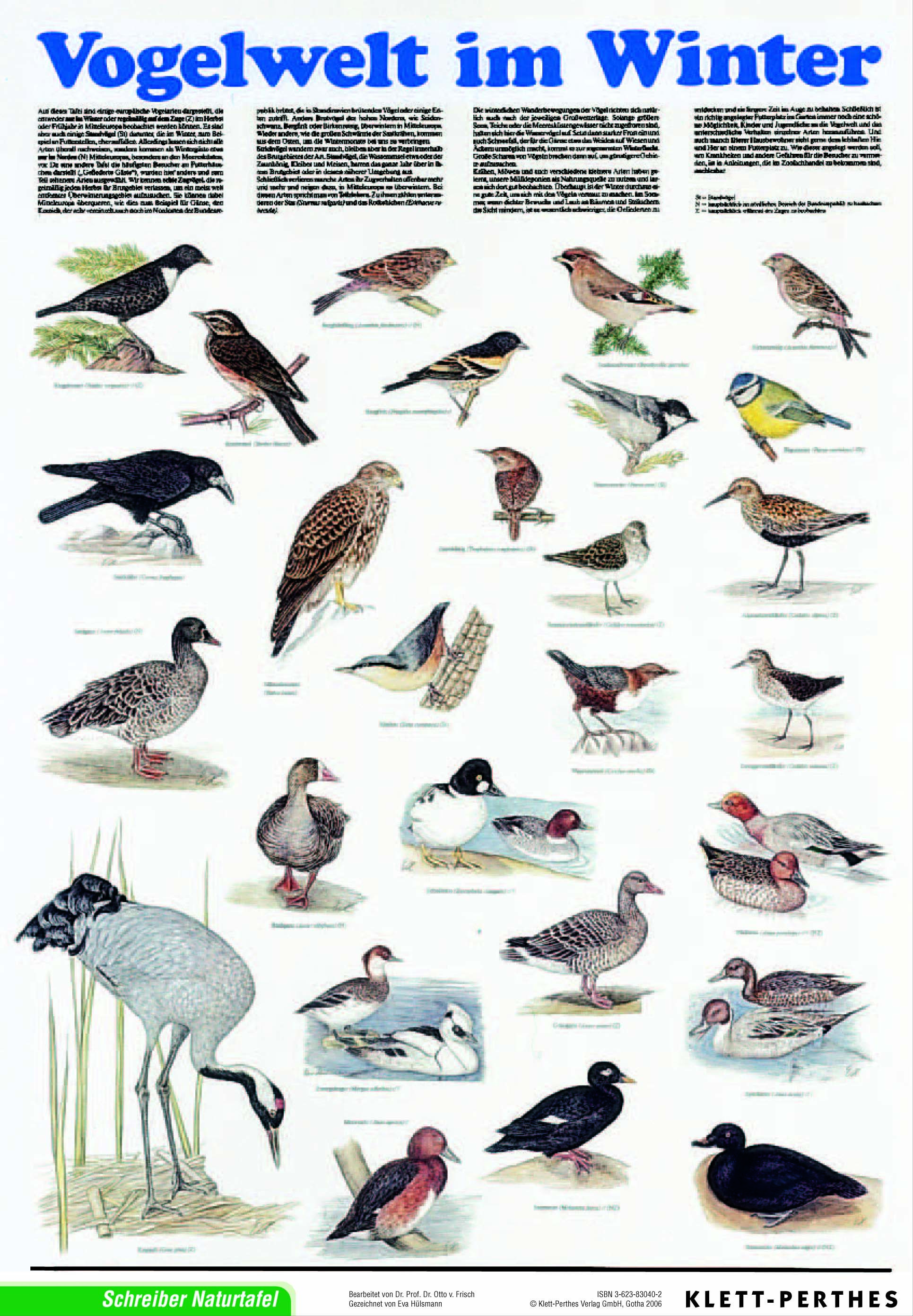 Lehrmittel lehrtafel vogelwelt im winter poster 978 3 623 for Goldfischteich im winter