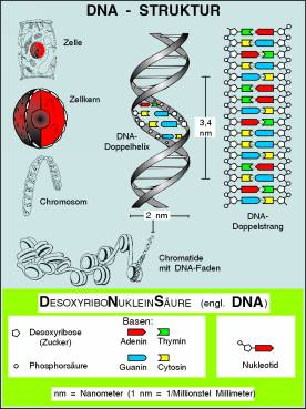 Transparentsatz DNA-Struktur und DNA-Verdopplung-T1013av