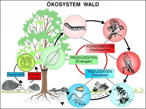 Transparentsatz Ökosystem Wald-T3011av