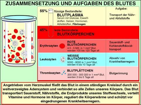 Lehrmittel Interaktive digitale Tafelbilder Blut Bestandteile Aufgaben