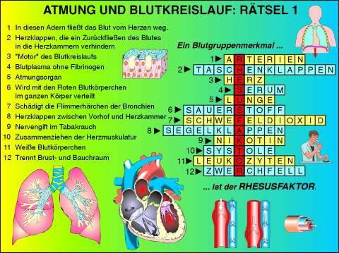Atmung Und Blutkreislauf