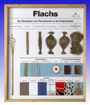 Technologie Schaukasten Fasern: Flachs / Leinen