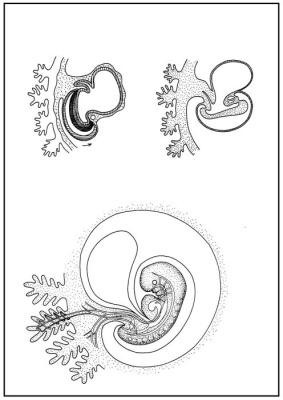 Skizzenblätter Biologie des Menschen, Teil III Steuerung, Lehrerexemplar
