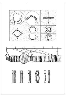 Skizzenblätter Biologie des Menschen, Teil IV Genetik, Lehrerexemplar