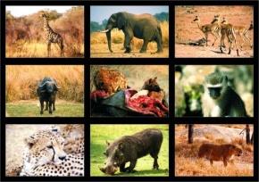Lehrmittel Tiere und Landschaften der Galapagos-Inseln, digitale Fotos