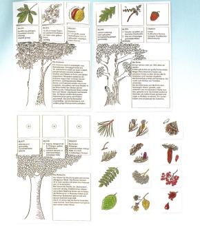 Der Baumdetektiv